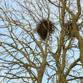 2021 Crows' nests up a tree